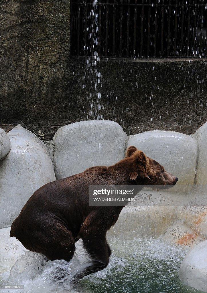 A Brown bear (Ursus arctos) cools itself down in a pool at the zoo in Rio de Janeiro, on January 9, 2013. AFP PHOTO/VANDERLEI ALMEIDA