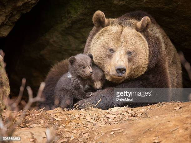 Brown bear Familie