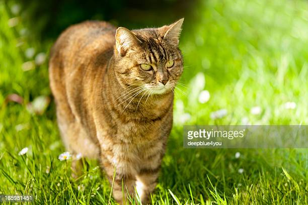 Brown Cat in grass wallpapper - sunshine