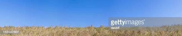 Brown Grass Panorama