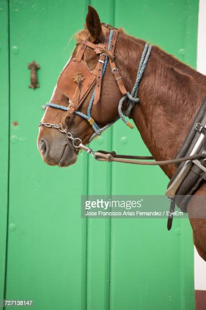 Brown Horse Against Green Wall