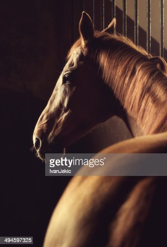 Brown horse headshot in stable
