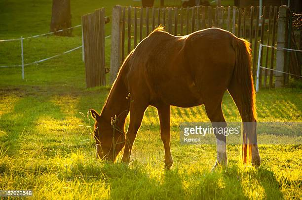 Brown horse in backlit at fall