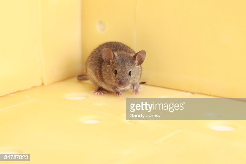 Brown Mouse and Cheese