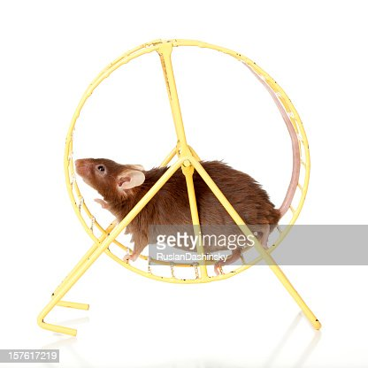 Brown mouse running in a wheel.
