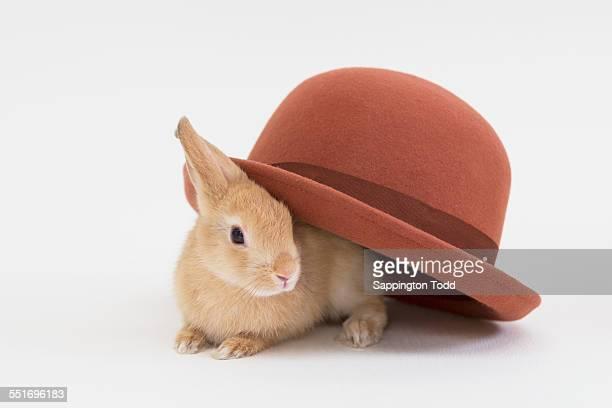 Brown Rabbit With Big Hat