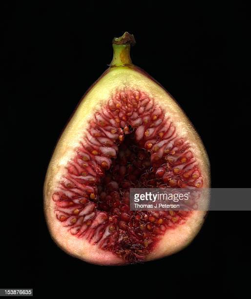 Brown Turkey fig (Ficus carica), cross section