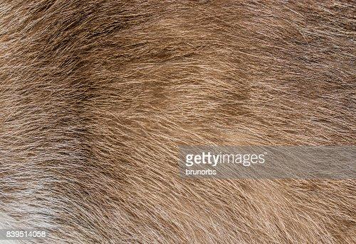 Brown, yellow and grey cat fur closeup : Stock Photo