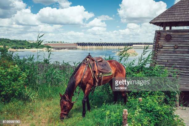 brown/red horse with view on Dnieper river on background