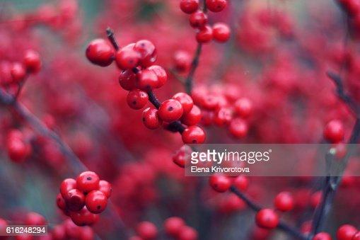 Brunch with red buckthorn berries. : Foto de stock