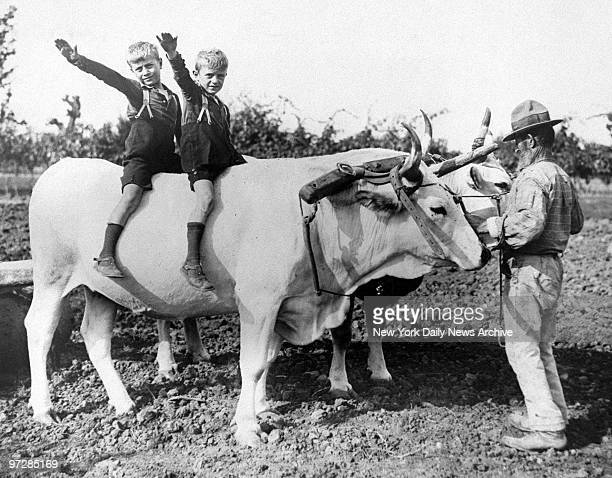 Bruno and Vittorio Mussolini give a fascist salute to their father Fascist party Italian Premier Benito Mussolini as they ride on oxen at the...