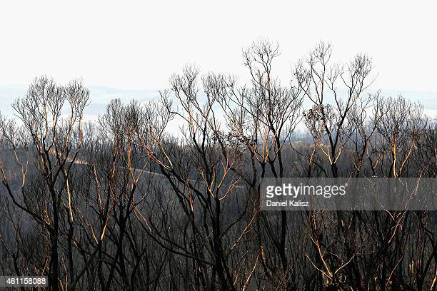 Brunt trees remain after a bushfire moved through Humbug Scrub in the Adelaide Hills on January 8 2015 in Adelaide Australia Prime Minister Abbott...