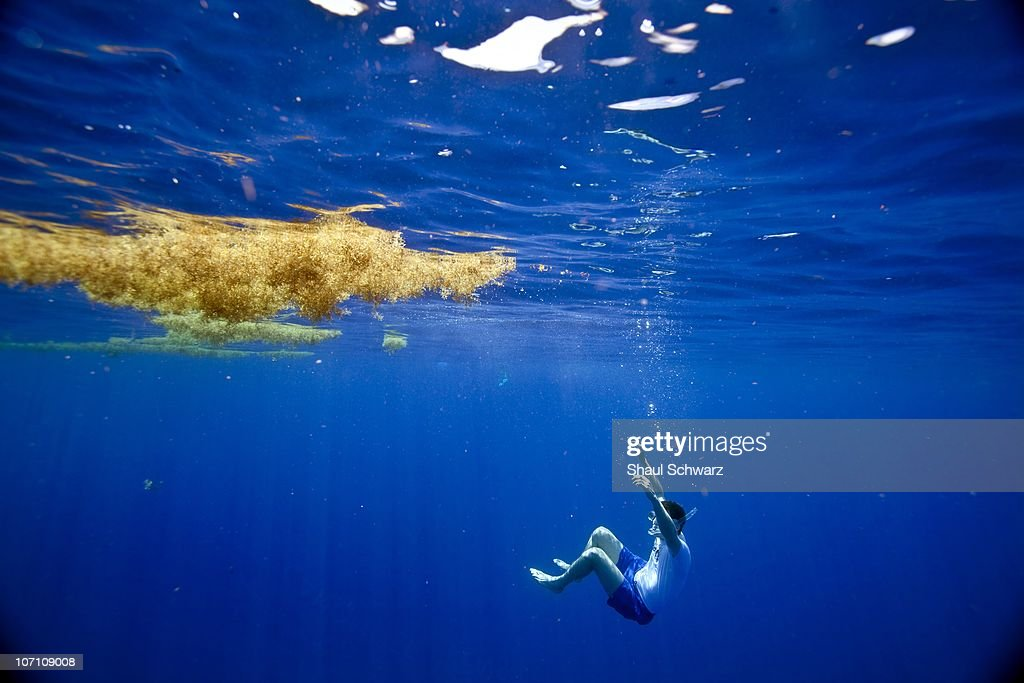 Bryan Walsh, Time Magazine writer, swims under a patch of sargassum during a expedition to the Sargasso Sea as part of the 'Mission Blue' campaign. The Sargasso Sea is home to seaweed of the genus Sargassum, which floats en masse on the surface there. The sargassum plays a major role in protecting different wildlife such as eels and turtles. Mission Blue's purpose is to explore the ocean while further protecting it. 'It's not enough that we protect 12% of our land but it's certainly not enough that we protect just a fraction of one percent of our oceans.' says Sylvia Earle, founder of the program. Earle is a National Geographic Explorer-in-Residence, sometimes called 'Her Deepness'. She led the Google Ocean Advisory Council, a team of 30 marine scientists providing content and scientific oversight for the 'Ocean in Google Earth.' To date, she has led over 70 expeditions, logging more than 6500 hours underwater. Among the more than 100 national and international honors she has received is the 2009 TED Prize for her proposal to establish a global network of marine protected areas.