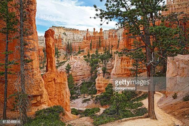 Bryce Canyon Footpath Through The Hoodoos