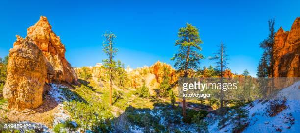 Bryce Canyon National Park pine trees and hoodo spires Utah
