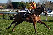 GBR: Plumpton Races