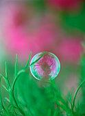 Bubble floating near grass, Furano, Hokkaido, Japan