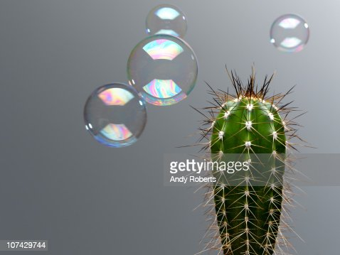 Bubble floating near spiny cactus