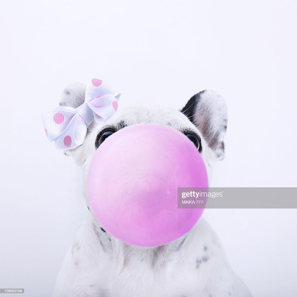 Bubble gum : Stock Photo