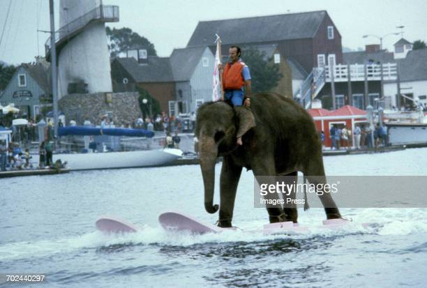 Bubbles the Waterskiing Elephant performs during a promotional event for the movie 'Honky Tong Freeway' circa 1981 in Marina del Rey California