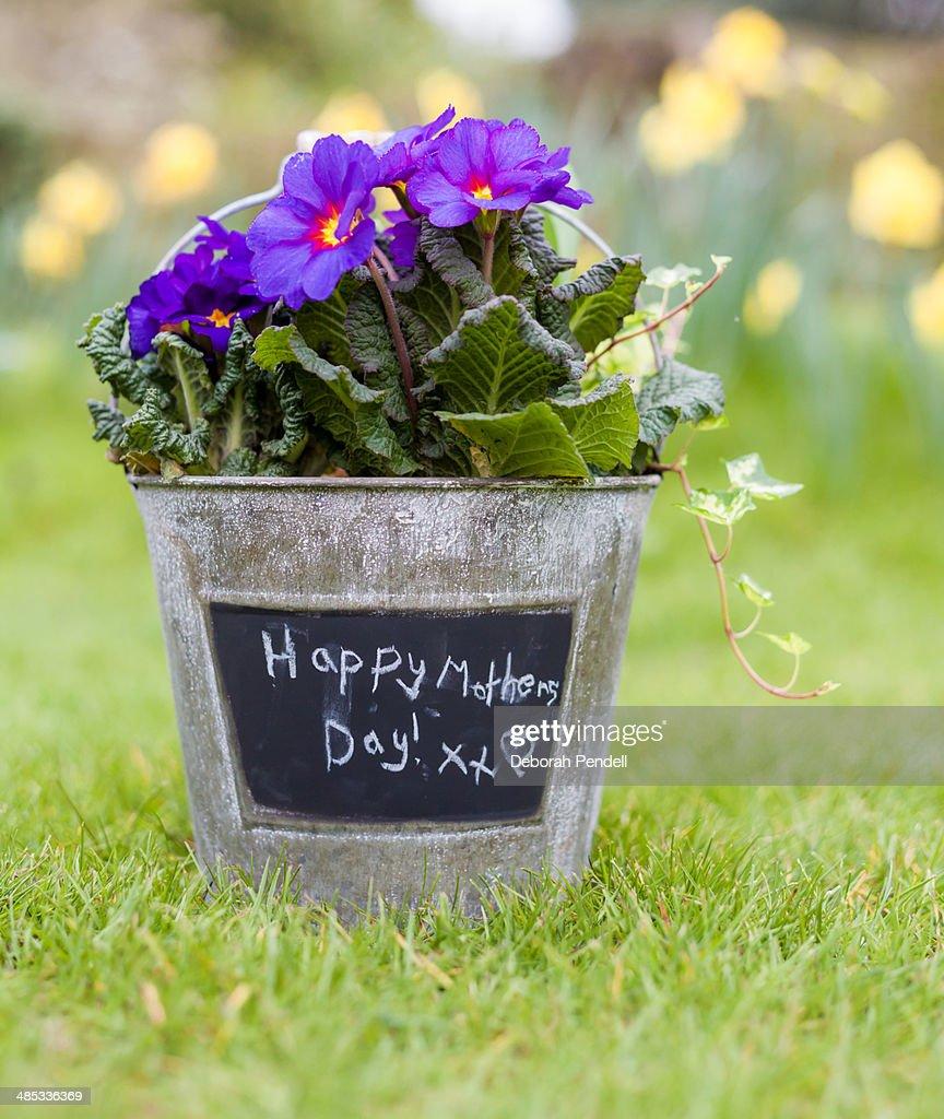 100 Flowers Seattle Debra Prinzing Post Seasonal Spring