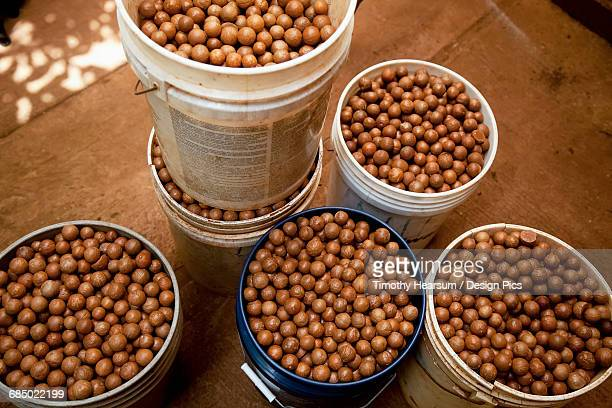 Buckets of unshelled nuts are seen at a macadamia farm