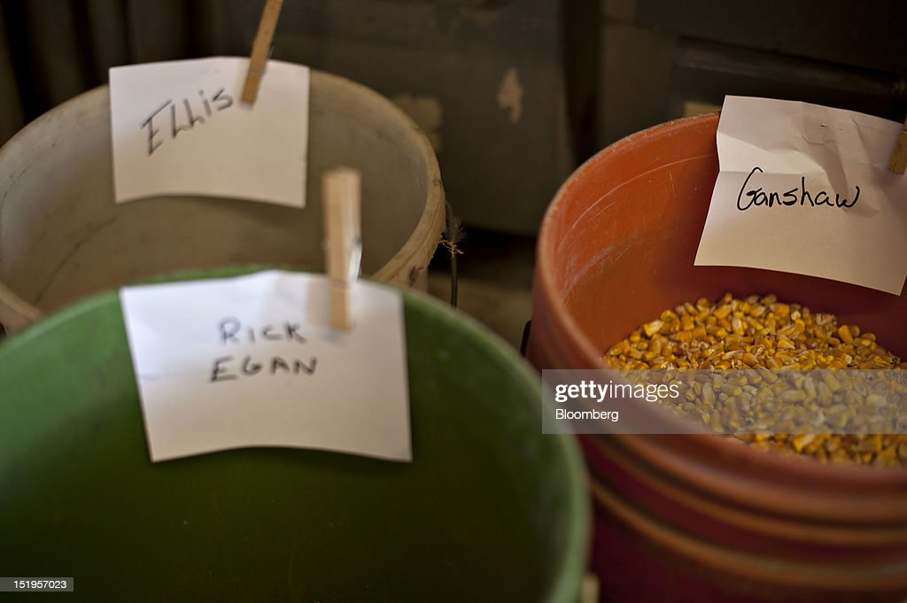 Buckets used to hold samples of corn from various farms sit in a control room at the Atherton Grain Co. Inc. elevator in Normandy, Illinois, U.S., on Wednesday, Sept. 12, 2012. The U.S. Department of Agriculture estimates for world agricultural supply and demand is bearish for corn, wheat and cotton and bullish for soybeans, according to Goldman Sachs Group Inc. Photographer: Daniel Acker/Bloomberg via Getty Images