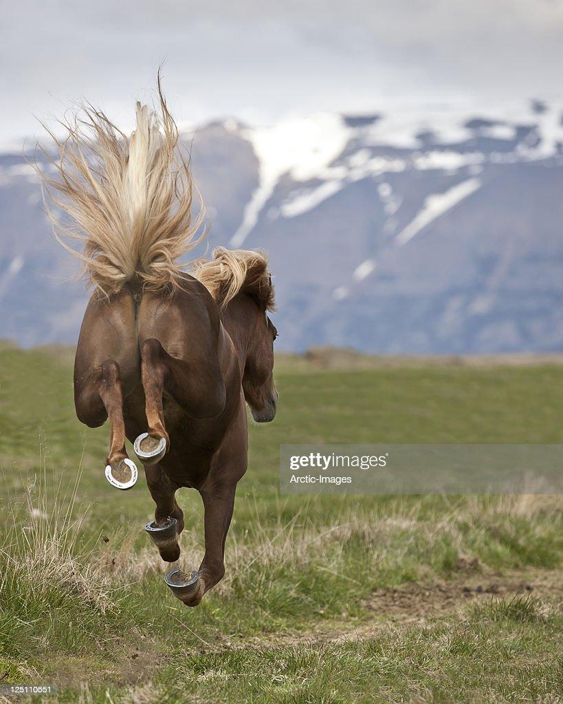 Bucking Horse : Stock Photo