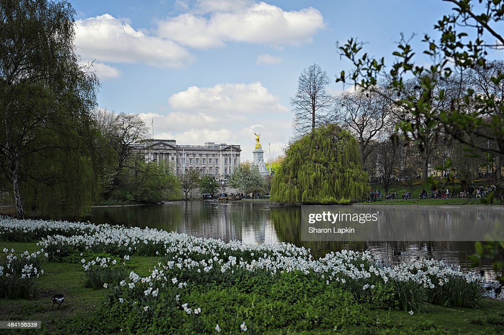 Buckingham Palace from St James's Park in the Spring.