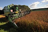 A buckwheat field owned by David Le Ruyet pastas manufacturer is harvested by a combineharvester on October 10 in his factory in Languidic Brittany...