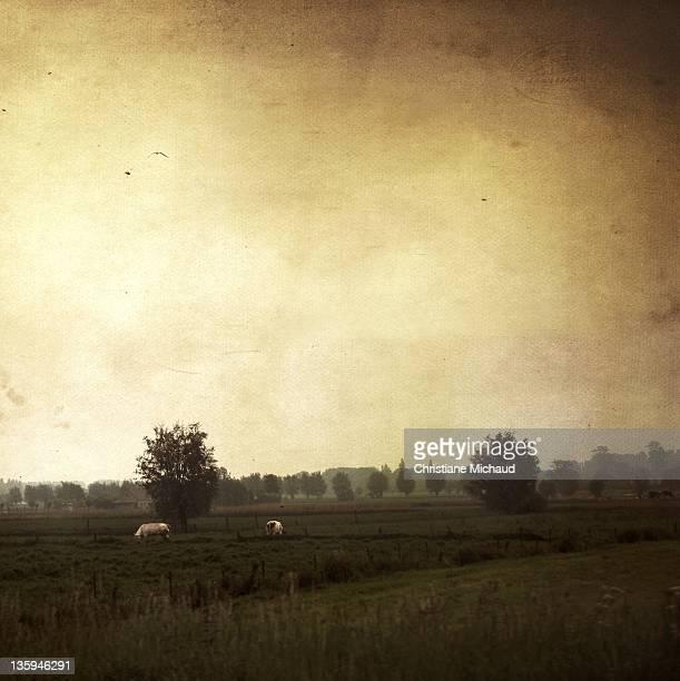 Bucolic field