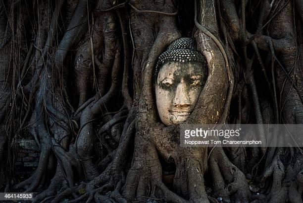 Buddha head Thailand