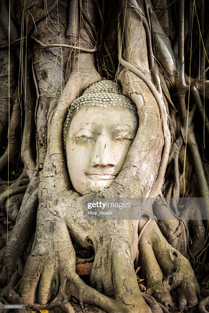 Buddha statue in the roots of tree at Ayutthaya, Thailand : Stock Photo