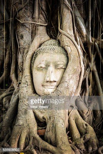 Buda Estátua com raízes de árvore em Ayutthaya,, Tailândia : Foto de stock