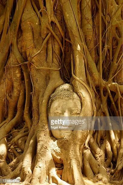 Buddha statues head