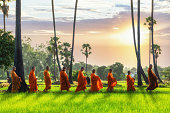 Buddhist monk and Buddhist novice going about with a bowl to receive food in the morning by walking in a row across rice field with palm trees to village