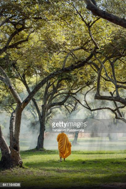Buddhist monk under a tree Ayutthaya
