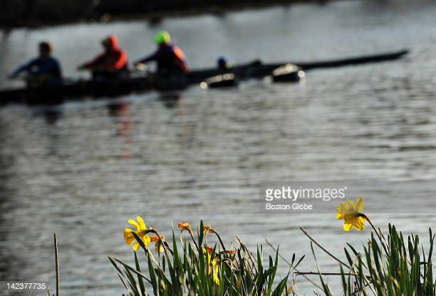 Budding flowers and rowers are a clear sign of spring along Memorial Drive on Friday March 30 2012