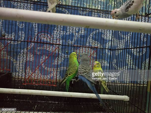 Budgerigars In Cage Against Wall