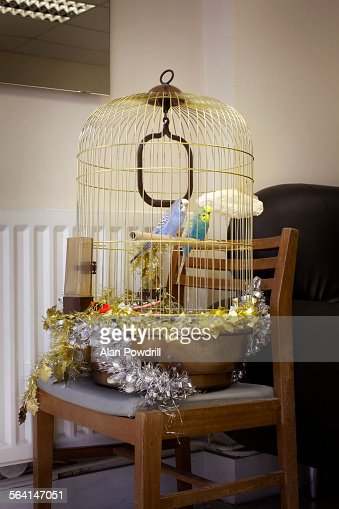 Budgies in birdcage wrapped in tinsel