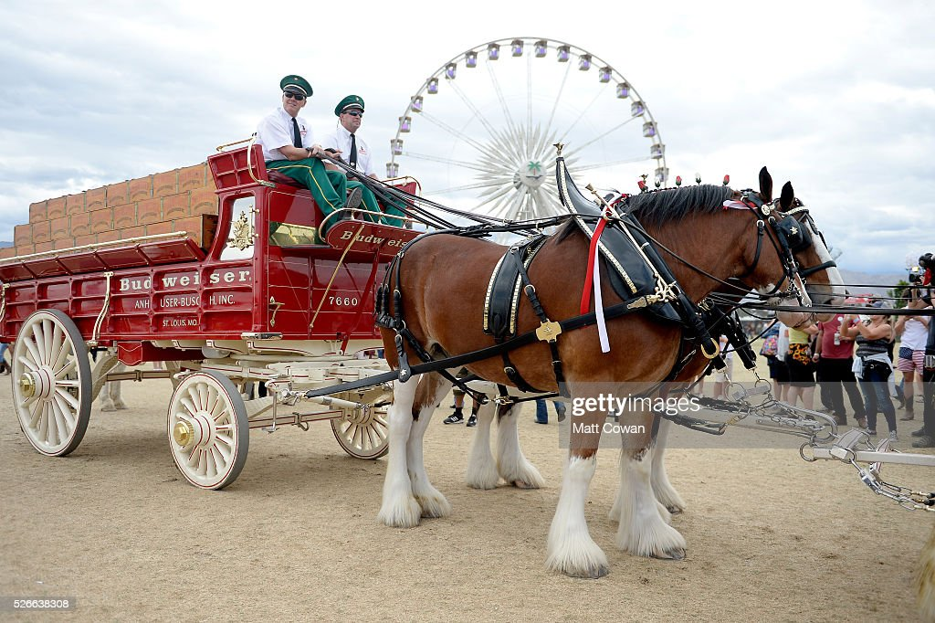 Budweiser Clydesdale horses are seen during 2016 Stagecoach California's Country Music Festival at Empire Polo Club on April 30, 2016 in Indio, California.