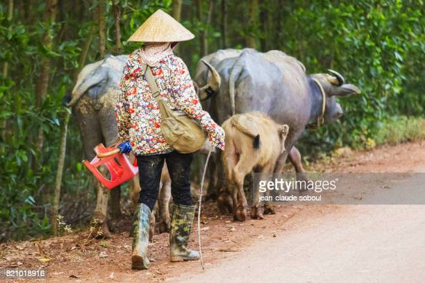 Buffalo guard walking on a road from Hue province (Vietnam)