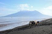 Buffalo on beach on sumbawa island, indonesia