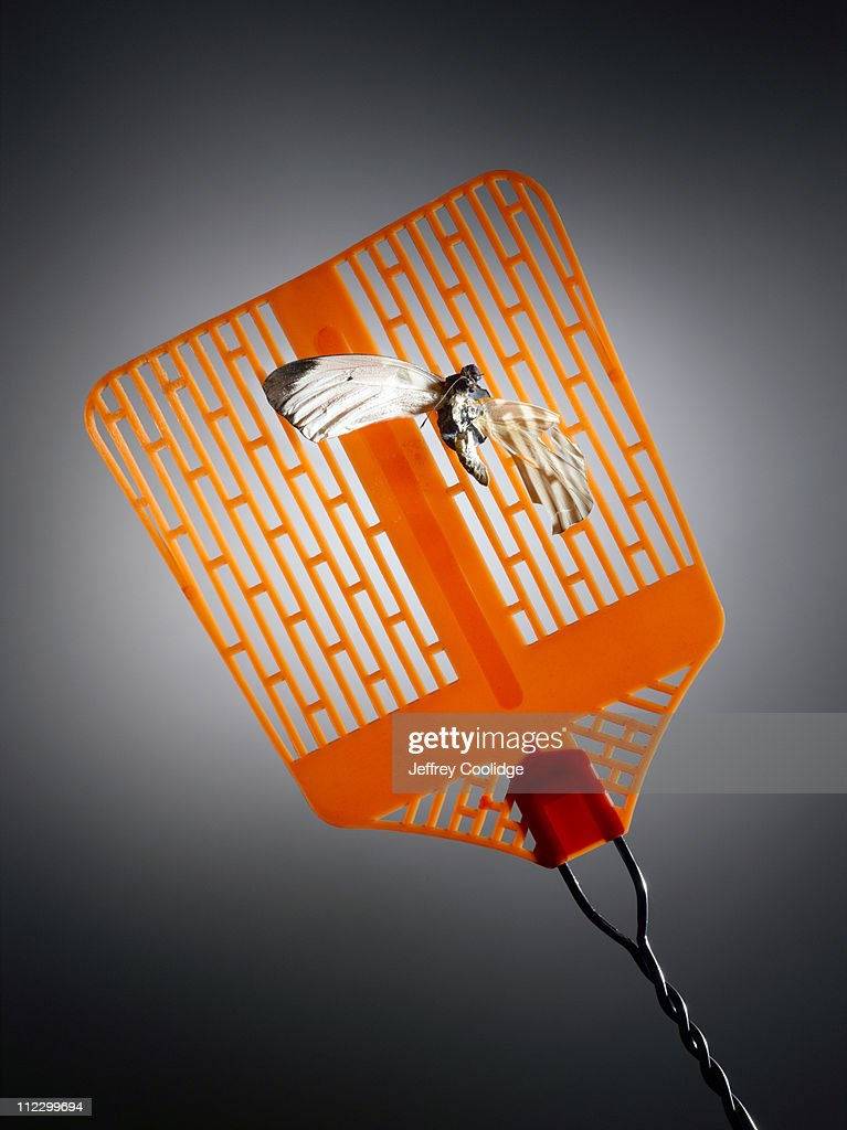 Bug and Fly Swatter : Stock Photo