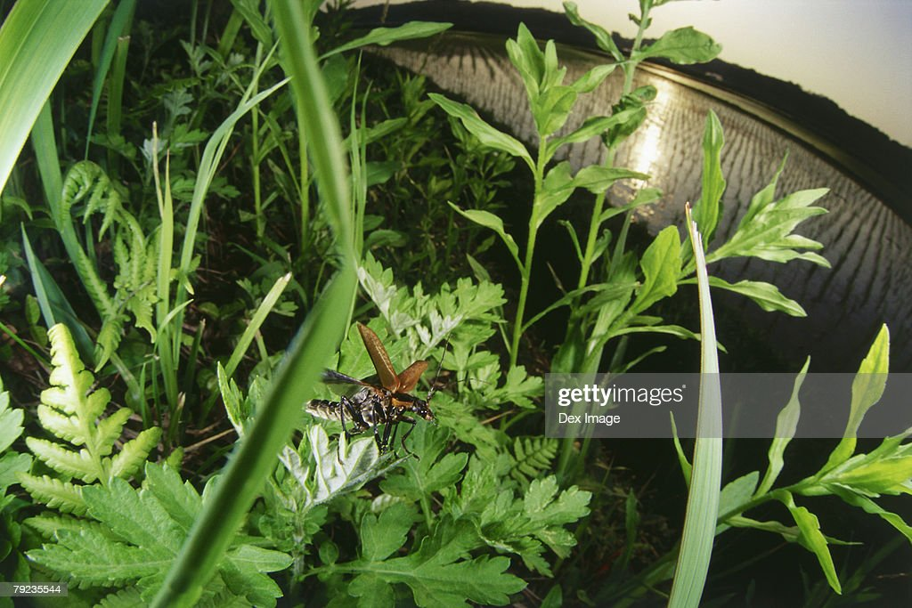 Bug flying in uncultivated forest : Stock Photo