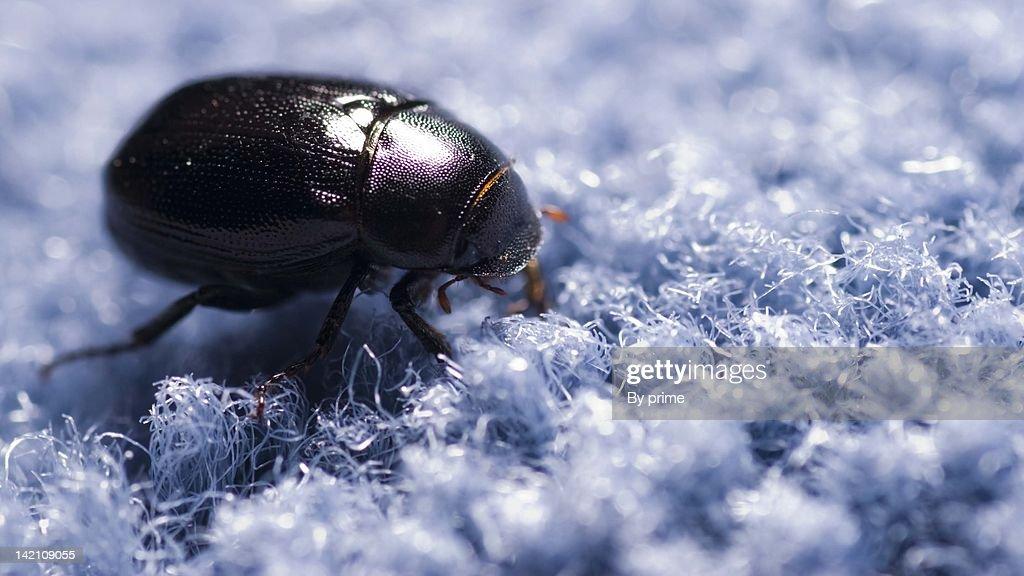 Bug on carpet : Stock Photo