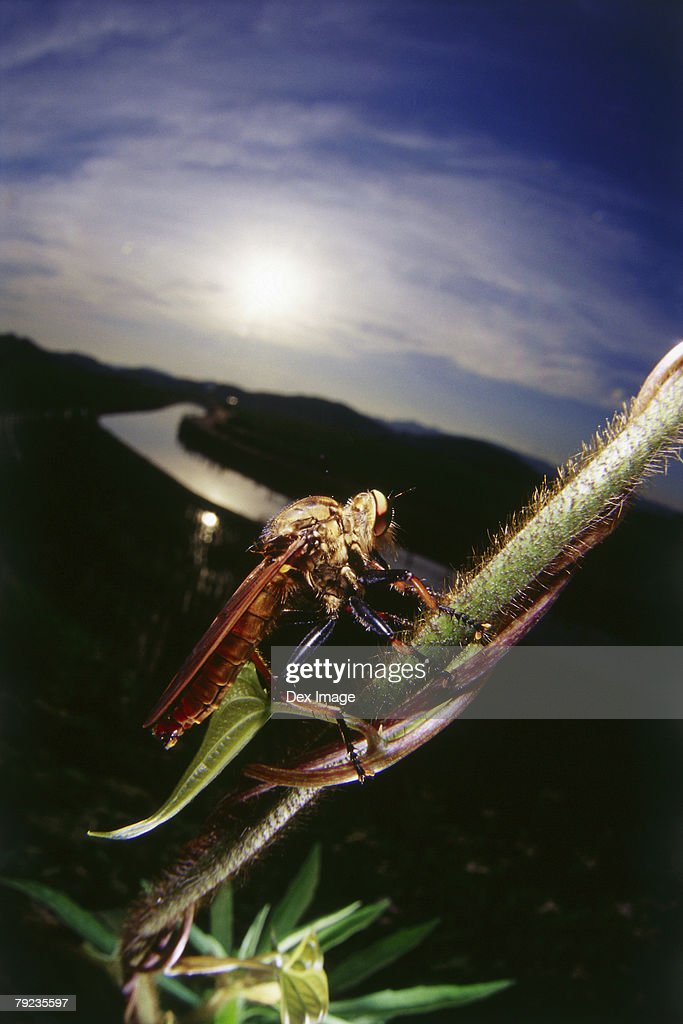 Bug on stem, close up : Stock Photo
