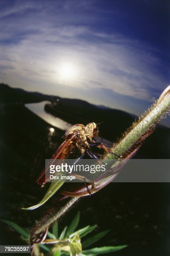 Bug on stem, close up : Stock Photo