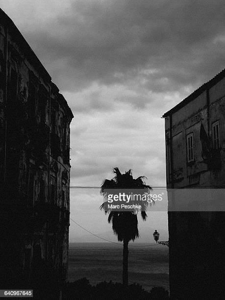 Buildings and palm tree against sea and cloudy sky, Tropea, Calabria, Italy