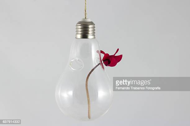 Bulb with a red flower